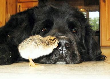Dog with bird friend