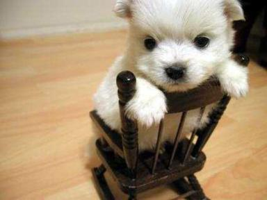 Dog backwards in rocking chair